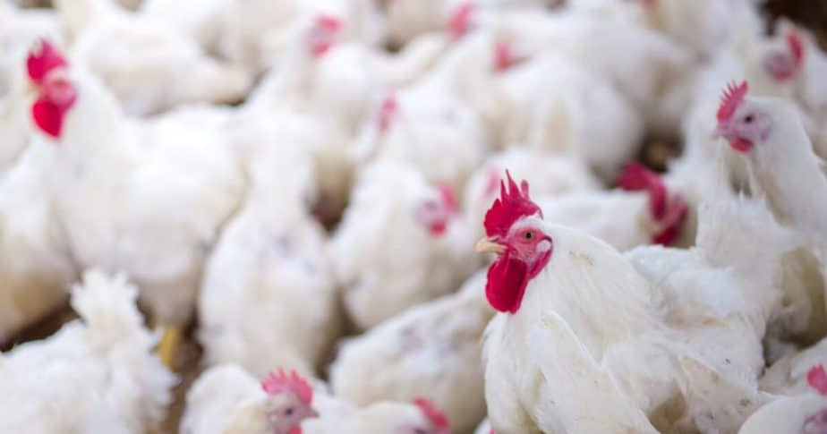 poultry business in Nigeria need capital