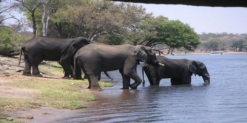 Cross river National park is another nice hangout spot in Calabar