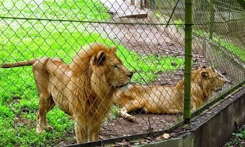 Nekede zoo