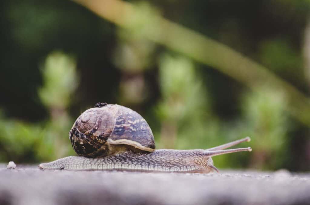 Snail farming in Nigeria; a complete guide
